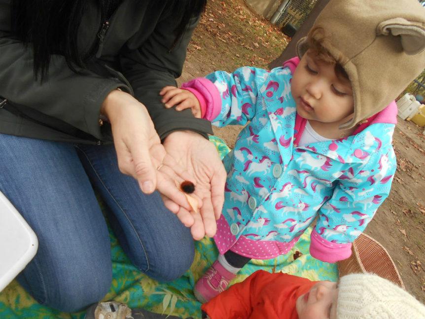 Children looking at woolly bear caterpillar